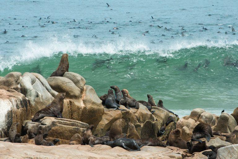 skeleton-coast-Moewe-bay-seal-colony